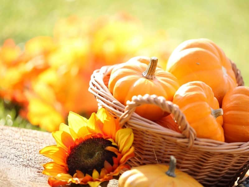 Trick or Treat! 5 Amazing Pumpkin Beauty Recipes|Body Care|Skin Care>Skin Care at Home